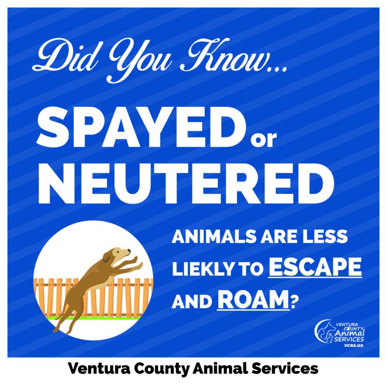 Spayed or Neutered Animals are Less Likely to Escape and Roam