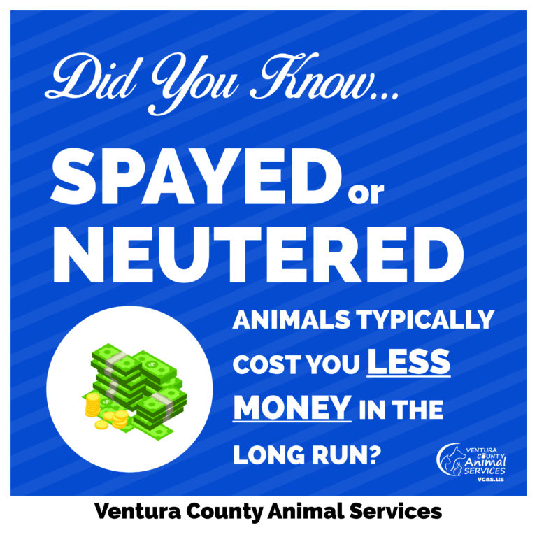 Spayed or Neutered Animals Typically Cost You Less Money in the Long Run