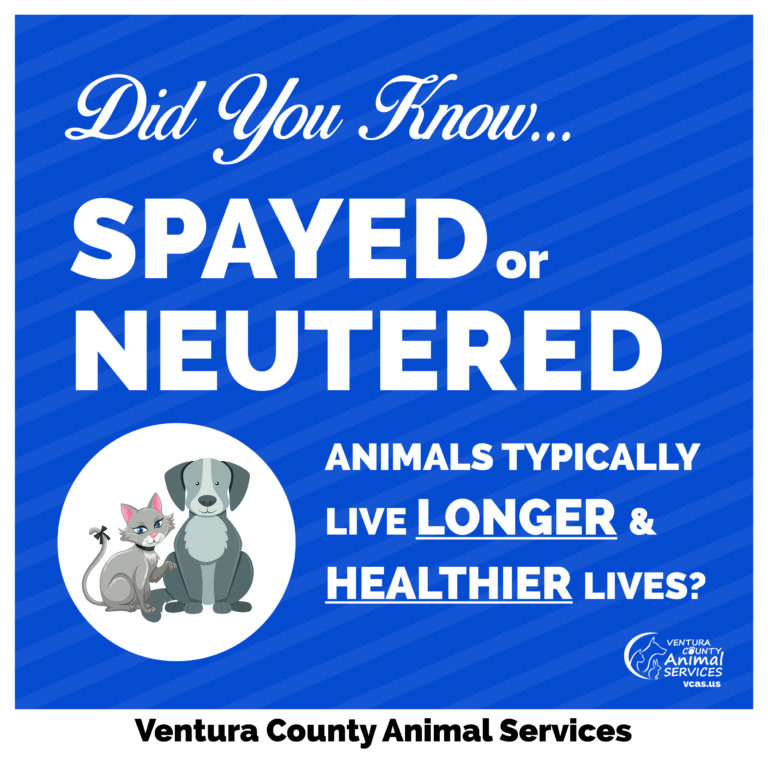 Spayed or Neutered Animals Typically Live Longer and Healthier Lives