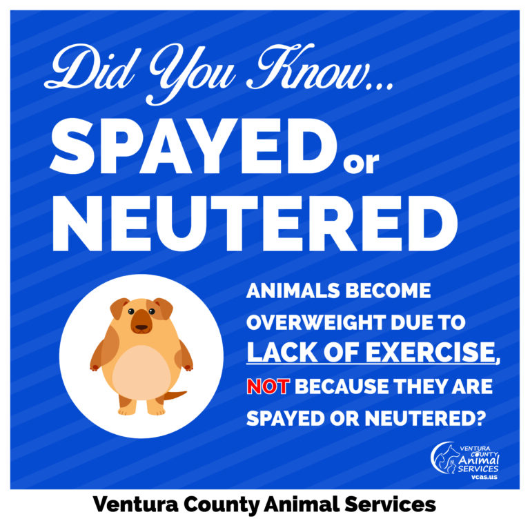 Spayed or Neutered Animals Become Overweight Do To Lack of Exercise Not Because They Are Spayed or Neutered