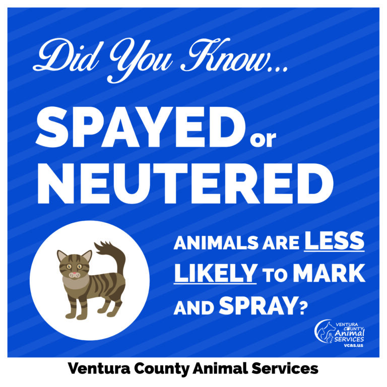 Spayed or Neutered Animals are Less Likely to Mark and SPRAY
