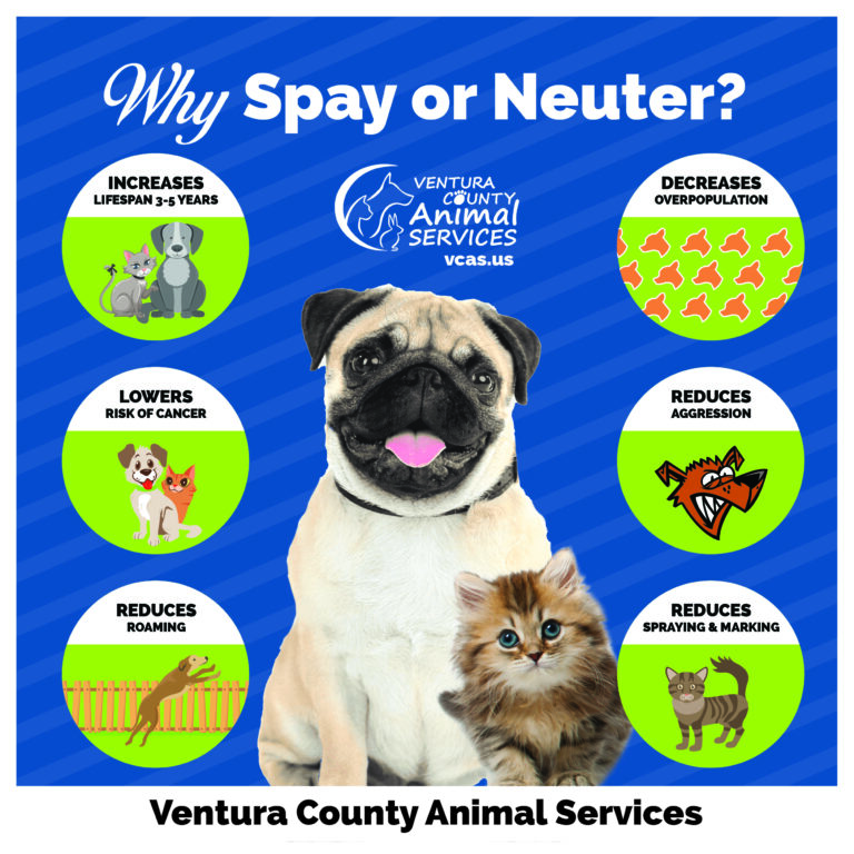 Why Spay or Neuter